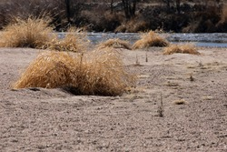 Clumps of grass in sand and gravel alongside a stream.  Grey and brown gravel and sand with tan clumps of dry grass with blue stream in the background.