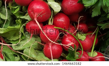 cluster of radishes just picked