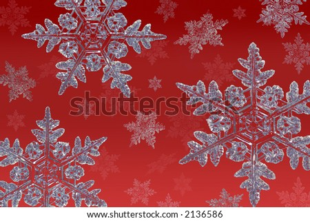 cluster of snowflakes on a red background