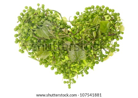 Clusters of green European garden unripe grapes as human heart concept. Isolated