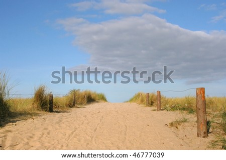 Clusters of yellow grass along a footpath in the sand dunes, against a bright blue sky, on the shore of the Baltic Sea, Germany.