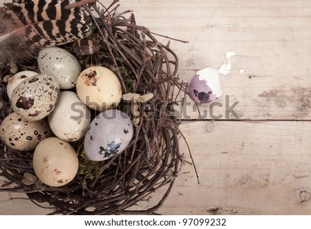 Clutch of speckled Easter eggs in a nest constructed of interwoven twigs with copyspace