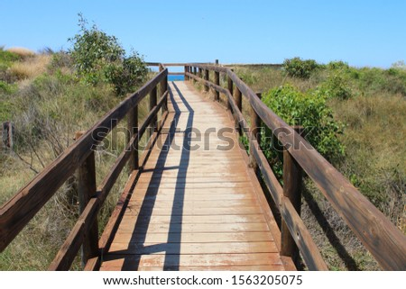 Coastal boardwalk to protect coastal vegetation under a blue summer sky #1563205075