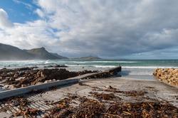 Coastal boat slipway covered in Kelp or seaweed