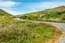 Coastal road with a blind curve and with lots of spring wildflowers on either side in Point Reyes National Seashore, northern California, USA