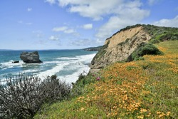 Coastline views near Arch Rock in Point Reyes National Seashore with Spring Flowers. Marin County, California, USA.