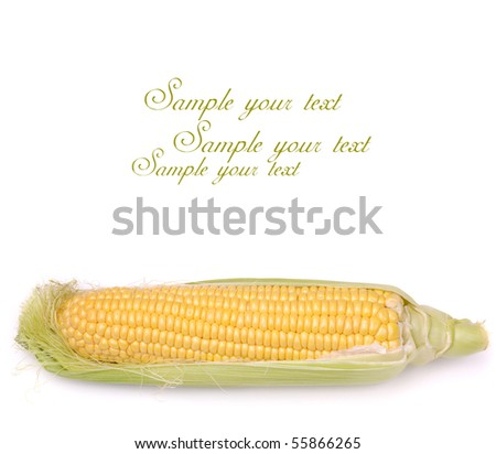 cob of corn on white background with place for text