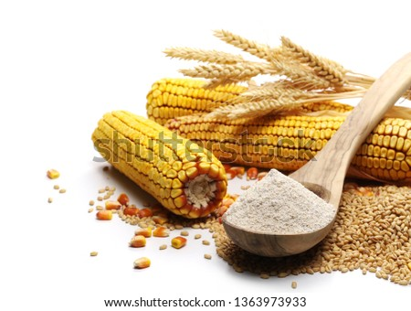 Cob of corn with kernels, dry wheat ears, grains, and integral flour in wooden spoon #1363973933
