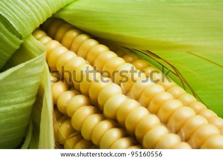 Cob of sweet ripe raw corn
