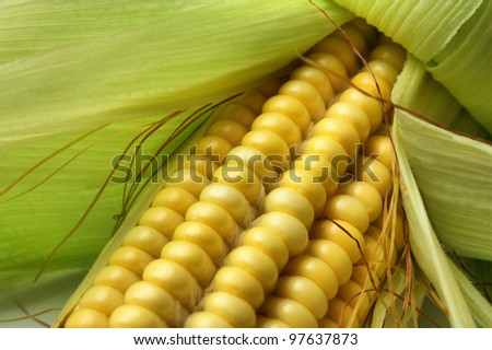 Cob of sweet ripe raw corn