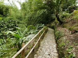 Cobble Stone Road in the San Francisco de Asis Botanical Garden in Marsella Colombia