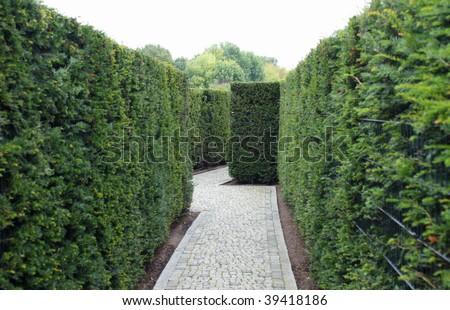 cobbled path through a green maze