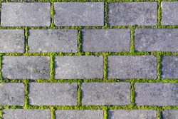 Cobbles close-up with a  green grass in the seams. Old stone pavement texture. Cobblestoned pavement . Abstract background.