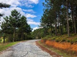 Cobblestone road in Kemerburgaz City Forest