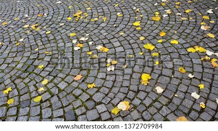 Cobblestone road with autumn leaves. Stone pavement. Fall in the city. Textured urban background. Urban landscape