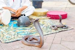 cobra at famous Marrakech square Djemaa el Fna