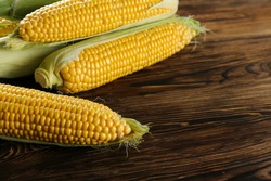 Cobs of ripe raw corn laid on dark wood textured table. Healthy summer food concept. Fresh uncooked corncob. Clean eating habits. Background, top view, close up, flat lay, copy space.