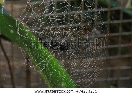 Cobweb #494273275