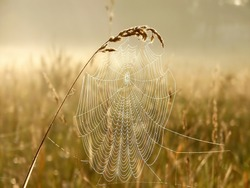 Cobweb in the light of the rising sun. Photo taken in October.