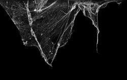 cobweb or spider web isolated on black background