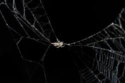 cobweb or spider web isolated on black background
