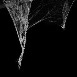 cobweb or spider web isolated on black background in ancient thai house