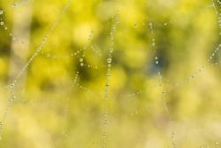 Cobweb or spiderweb natural rain pattern background close-up. Cobweb with drops of rain pattern in blue light. Cobweb net texture with morning rain bokeh. Partial blur view lines spider web necklace