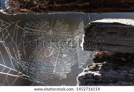 Cobweb or spiderweb on old wooden texture background wall in ancient house. Old grunge spiderweb weathered dusty wall & cobweb. Spiderweb spooky, scary, horror background.  #1452716114