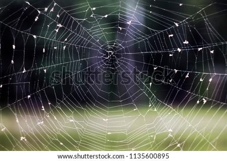 Cobweb ,spiderweb with water drop. Close up Cobweb ,spiderweb with water drop.