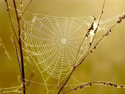 Cobweb surrounded by the morning mist at sunrise. Photo taken in October.