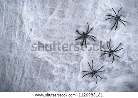Cobweb with Black Spiders on Dark Cobweb Backround, Halloween Holiday Symbol