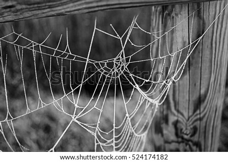 Cobweb with ice on wooden trunk, nature #524174182