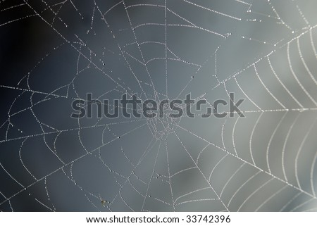 Cobweb with morning dew against blue background