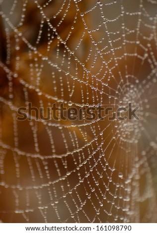 Cobweb with multitude of raindrops - stock photo