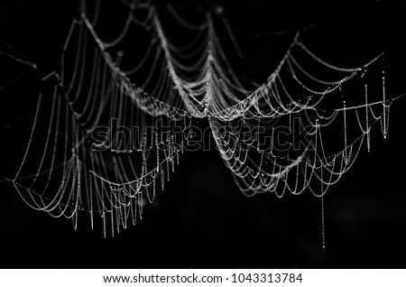 cobwebs in the dew on black background