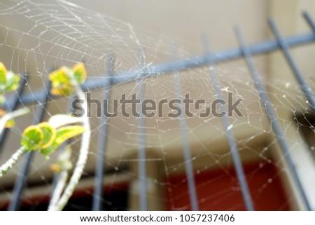 cobwebs on trees