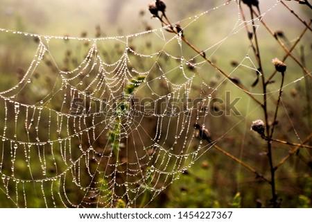 Cobwebs Dew