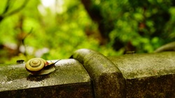 Cochlea in early summer rainy day, Kyoto, Japan