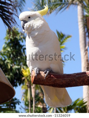 cockatoo sitting on a perch