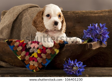 Cocker Spaniel puppy and flower red
