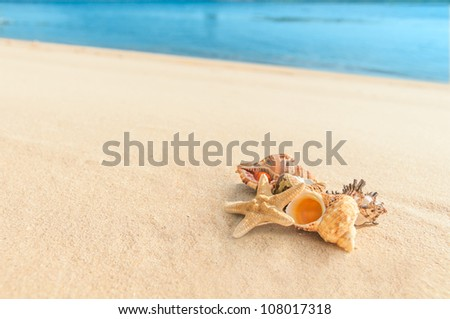 cockleshell on sand on a background a sea - stock photo