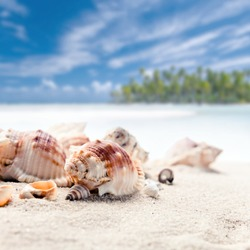 Cockleshells on sea sand, focus on a foreground