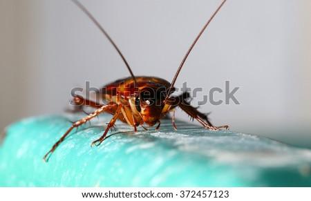 Shutterstock cockroach