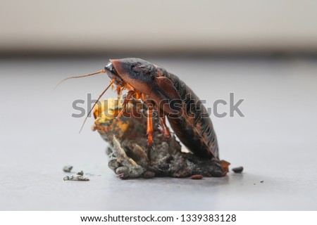 Cockroach bug on the dirt in the kitchen