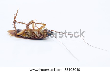 cockroach dead on isolated white background