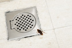 Cockroach in the bathroom near the drain hole. The problem with insects. Cockroaches climb through the sewers