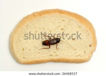 Cockroach on a slice of bread - stock photo