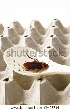 cockroach on carton