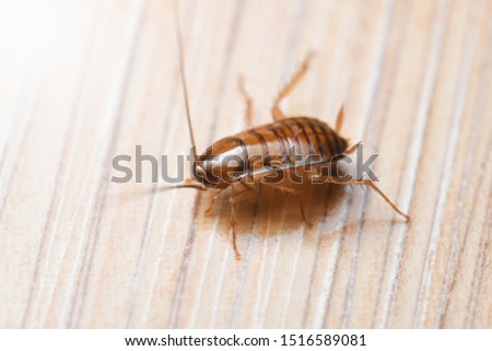 Photo of  Cockroache nymph on nature background.