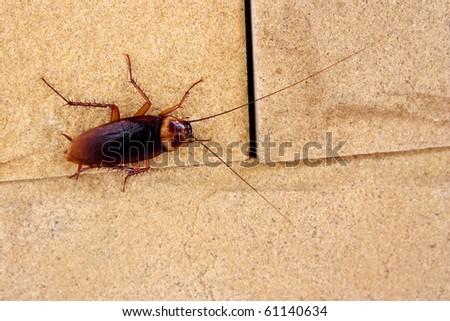 cockroaches - stock photo